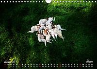 Mothers of Earth, das Leben kann soo prachtvoll sein ! (Wandkalender 2019 DIN A4 quer) - Produktdetailbild 1