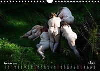 Mothers of Earth, das Leben kann soo prachtvoll sein ! (Wandkalender 2019 DIN A4 quer) - Produktdetailbild 2