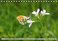Münsterland - Vielfältige Schönheit (Tischkalender 2019 DIN A5 quer) - Produktdetailbild 5