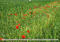 Münsterland - Vielfältige Schönheit (Wandkalender 2019 DIN A2 quer) - Produktdetailbild 7