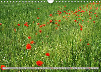 Münsterland - Vielfältige Schönheit (Wandkalender 2019 DIN A4 quer) - Produktdetailbild 7
