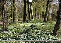 Münsterland - Vielfältige Schönheit (Wandkalender 2019 DIN A4 quer) - Produktdetailbild 6
