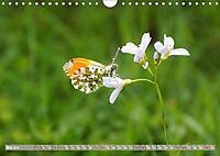 Münsterland - Vielfältige Schönheit (Wandkalender 2019 DIN A4 quer) - Produktdetailbild 5