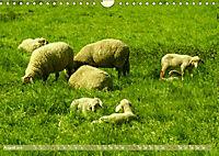 Münsterland - Vielfältige Schönheit (Wandkalender 2019 DIN A4 quer) - Produktdetailbild 8