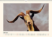 Muh, Mäh, Miau & Co (Wandkalender 2019 DIN A3 quer) - Produktdetailbild 6