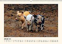 Muh, Mäh, Miau & Co (Wandkalender 2019 DIN A3 quer) - Produktdetailbild 1