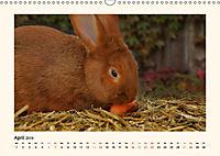 Muh, Mäh, Miau & Co (Wandkalender 2019 DIN A3 quer) - Produktdetailbild 4
