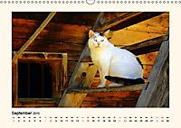 Muh, Mäh, Miau & Co (Wandkalender 2019 DIN A3 quer) - Produktdetailbild 9
