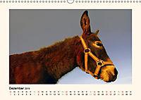 Muh, Mäh, Miau & Co (Wandkalender 2019 DIN A3 quer) - Produktdetailbild 12
