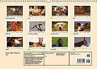 Muh, Mäh, Miau & Co (Wandkalender 2019 DIN A3 quer) - Produktdetailbild 13