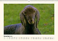 Muh, Mäh, Miau & Co (Wandkalender 2019 DIN A3 quer) - Produktdetailbild 11