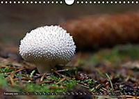 Mushroom Season (Wall Calendar 2019 DIN A4 Landscape) - Produktdetailbild 2