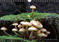 Mushroom Season (Wall Calendar 2019 DIN A4 Landscape) - Produktdetailbild 4
