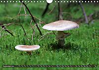 Mushroom Season (Wall Calendar 2019 DIN A4 Landscape) - Produktdetailbild 9