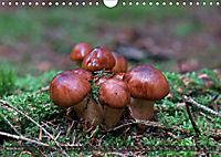 Mushroom Season (Wall Calendar 2019 DIN A4 Landscape) - Produktdetailbild 3