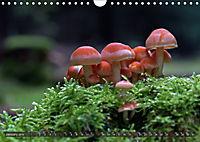 Mushroom Season (Wall Calendar 2019 DIN A4 Landscape) - Produktdetailbild 1