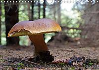 Mushroom Season (Wall Calendar 2019 DIN A4 Landscape) - Produktdetailbild 8