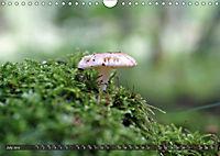 Mushroom Season (Wall Calendar 2019 DIN A4 Landscape) - Produktdetailbild 7