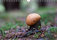 Mushroom Season (Wall Calendar 2019 DIN A4 Landscape) - Produktdetailbild 6