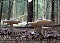 Mushroom Season (Wall Calendar 2019 DIN A4 Landscape) - Produktdetailbild 5