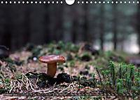 Mushroom Season (Wall Calendar 2019 DIN A4 Landscape) - Produktdetailbild 10