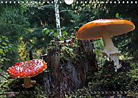 Mushroom Season (Wall Calendar 2019 DIN A4 Landscape) - Produktdetailbild 11