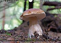 Mushroom Season (Wall Calendar 2019 DIN A4 Landscape) - Produktdetailbild 12