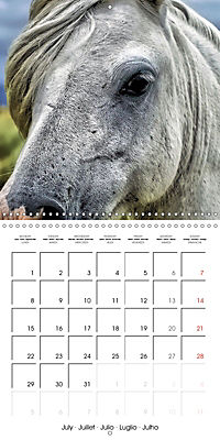 Mustangs - Wild Horses in the USA (Wall Calendar 2019 300 × 300 mm Square) - Produktdetailbild 7
