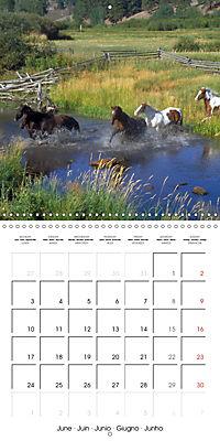 Mustangs - Wild Horses in the USA (Wall Calendar 2019 300 × 300 mm Square) - Produktdetailbild 6