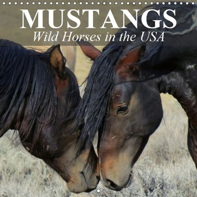 Mustangs - Wild Horses in the USA (Wall Calendar 2019 300 × 300 mm Square), Elisabeth Stanzer