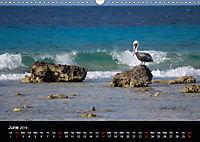 My Bonaire 2019 (Wall Calendar 2019 DIN A3 Landscape) - Produktdetailbild 6