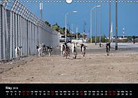 My Bonaire 2019 (Wall Calendar 2019 DIN A3 Landscape) - Produktdetailbild 5