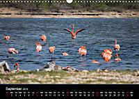 My Bonaire 2019 (Wall Calendar 2019 DIN A3 Landscape) - Produktdetailbild 9