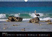 My Bonaire 2019 (Wall Calendar 2019 DIN A4 Landscape) - Produktdetailbild 6