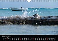 My Bonaire 2019 (Wall Calendar 2019 DIN A4 Landscape) - Produktdetailbild 2