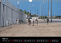 My Bonaire 2019 (Wall Calendar 2019 DIN A4 Landscape) - Produktdetailbild 5