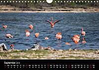 My Bonaire 2019 (Wall Calendar 2019 DIN A4 Landscape) - Produktdetailbild 9