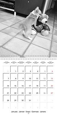 My Little Chihuahua (Wall Calendar 2019 300 × 300 mm Square) - Produktdetailbild 1