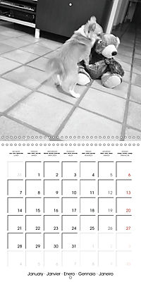 My Little Chihuahua (Wall Calendar 2019 300 × 300 mm Square) - Produktdetailbild 1