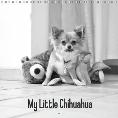 My Little Chihuahua (Wall Calendar 2019 300 × 300 mm Square), Hasler Astrid