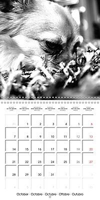 My Little Chihuahua (Wall Calendar 2019 300 × 300 mm Square) - Produktdetailbild 10
