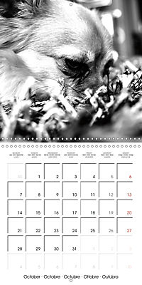 My Little Chihuahua (Wall Calendar 2019 300 × 300 mm Square) - Produktdetailbild 10