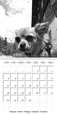 My Little Chihuahua (Wall Calendar 2019 300 × 300 mm Square) - Produktdetailbild 2
