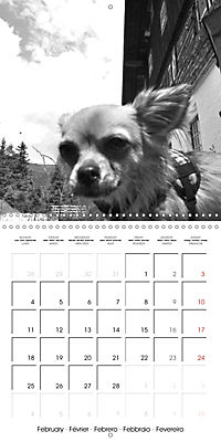 My Little Chihuahua (Wall Calendar 2019 300 × 300 mm Square) - Produktdetailbild 2