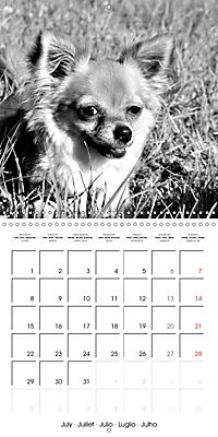My Little Chihuahua (Wall Calendar 2019 300 × 300 mm Square) - Produktdetailbild 7