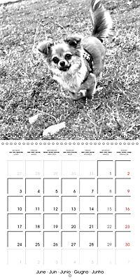 My Little Chihuahua (Wall Calendar 2019 300 × 300 mm Square) - Produktdetailbild 6