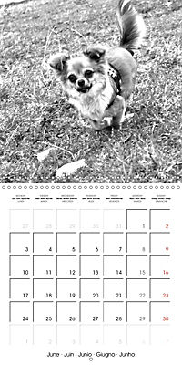 My Little Chihuahua (Wall Calendar 2019 300 × 300 mm Square) - Produktdetailbild 6