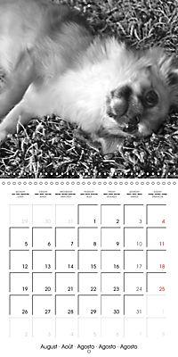 My Little Chihuahua (Wall Calendar 2019 300 × 300 mm Square) - Produktdetailbild 8