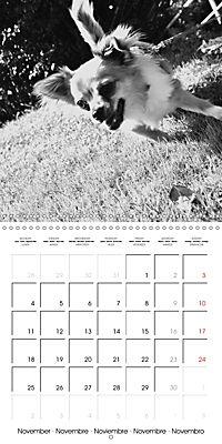 My Little Chihuahua (Wall Calendar 2019 300 × 300 mm Square) - Produktdetailbild 11