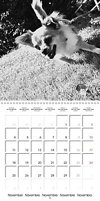My Little Chihuahua (Wall Calendar 2019 300 × 300 mm Square) - Produktdetailbild 11
